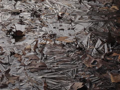fallen leaves in an icy puddle