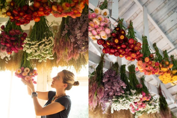 Floret drying flowers