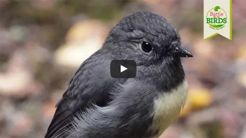 Video still: robin