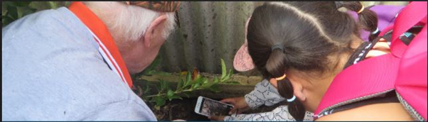 Using a cellphone to photograph an insect and upload to NaturewatchNZ
