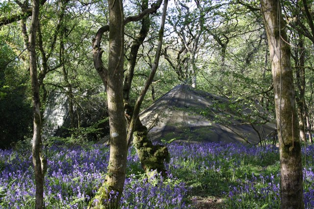 Bluebell woods with base camp set up