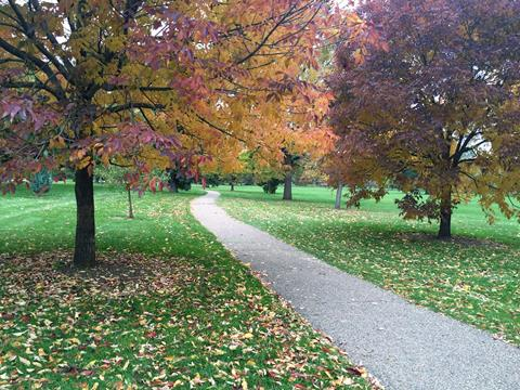 Blog Photo ~ Winding Path in Autumn