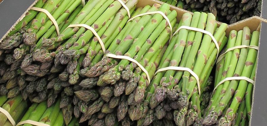 Bury Lane Farm Shop Asparagus Season 2018 Started