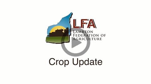 COVID19 Lambton County Crop Update