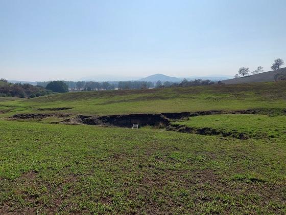 Pasture Regrowth