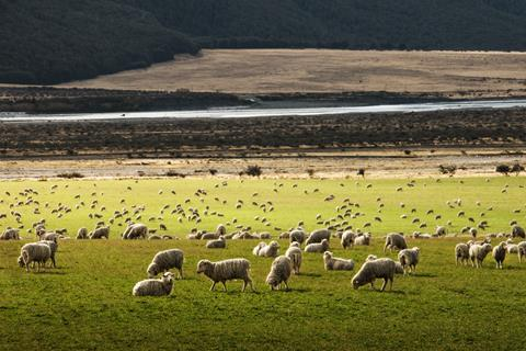 Image of sheep on farm
