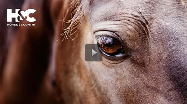 Horse & Country TV is an equestrian sports and lifestyle channel available on cable, broadband and satellite in the UK and Ireland, the Netherlands, Sweden, Germany and Australia