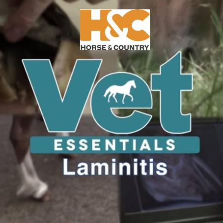 Vet Essentials with Horse & Country TV