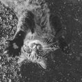 14 Life Lessons I learned From My Cat