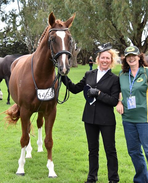 Highest scoring AWHA registered male horse in the PSI Dressage & Jumping with the Stars 2019 Led Classes was won by RVL Feelin' Groovy and owner/breeder Leah Crane.