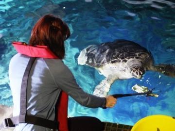 Turtle feeding. © Sea Life London Aquarium.