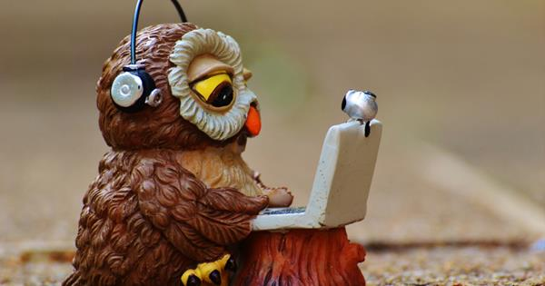 owl looking at a laptop