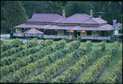 Oreillys Canungra valley vineyards Killowen homestead